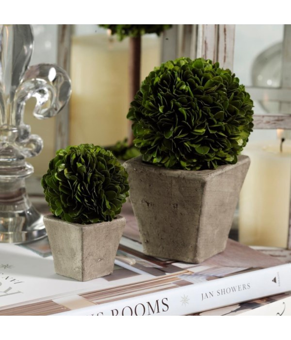 Large Round Boxwood Topiaries in Square Pots