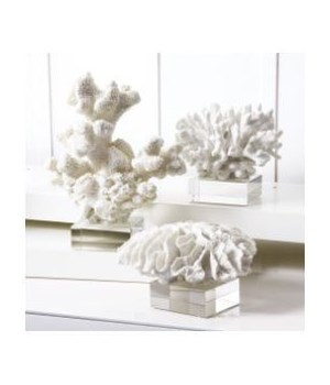 White Coral Sculpture on Glass Stand, Asst
