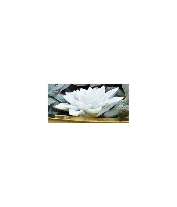 Succulent, Bisque White, Medium