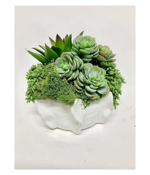 Succulents in Small Pinch Bowl