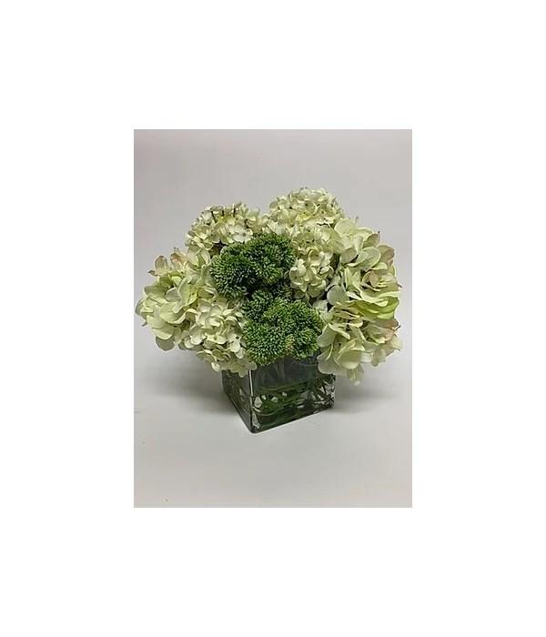"White Hydrangea in 6"" Cube"