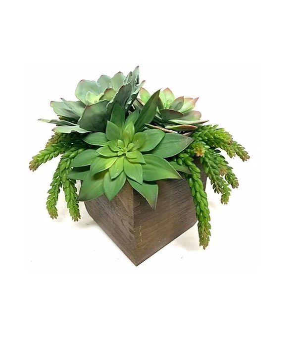 Succulents in Wood Box