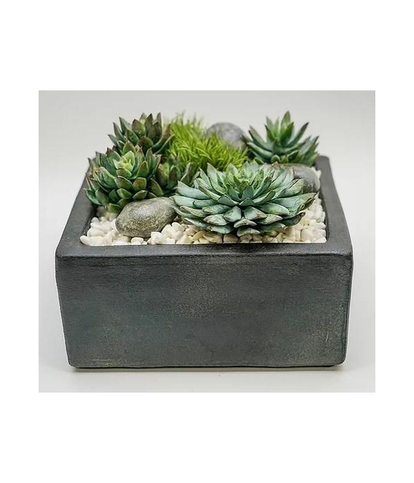 """Baja 8"""" Square Succulent"""