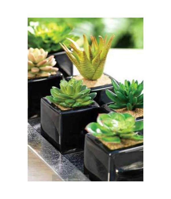 Desert Succulents in Ceramic Container, Assorted