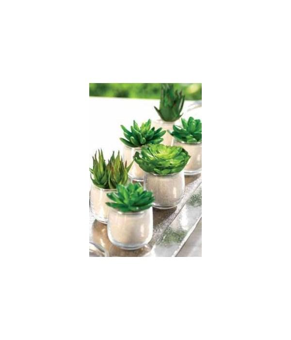 Succulent in Sand Pot, Assorted