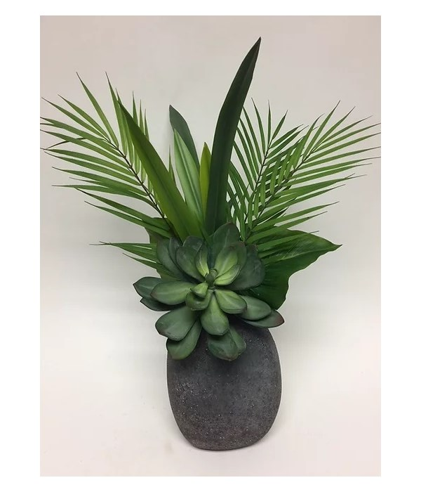 Succulent, Foliages in Volc. Egg