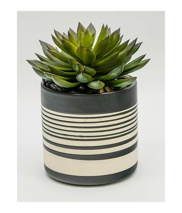 Sinclair Pot Succulent