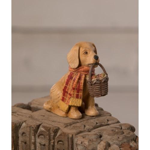 Fall Pup
