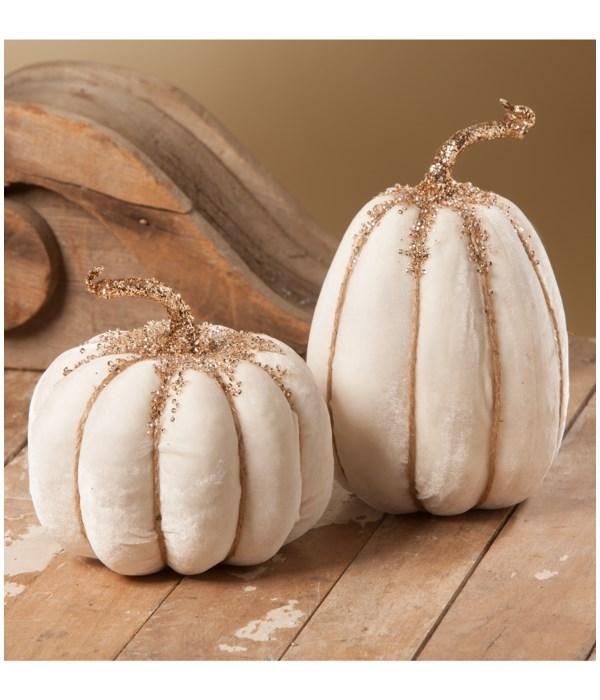 White Velvet Pumpkin 2A