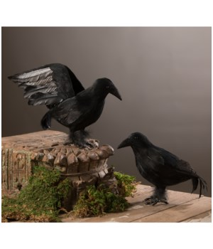 Black Feathered Crow 2/A