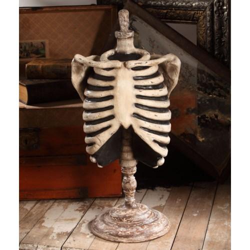 Skeleton Mannequin