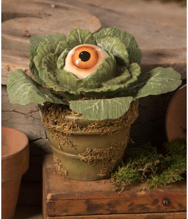 Eerie Eyeball Lettuce