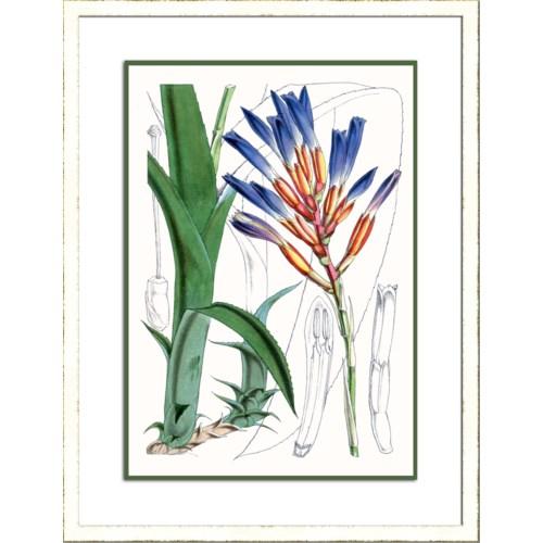 TROPICAL PLANTS I