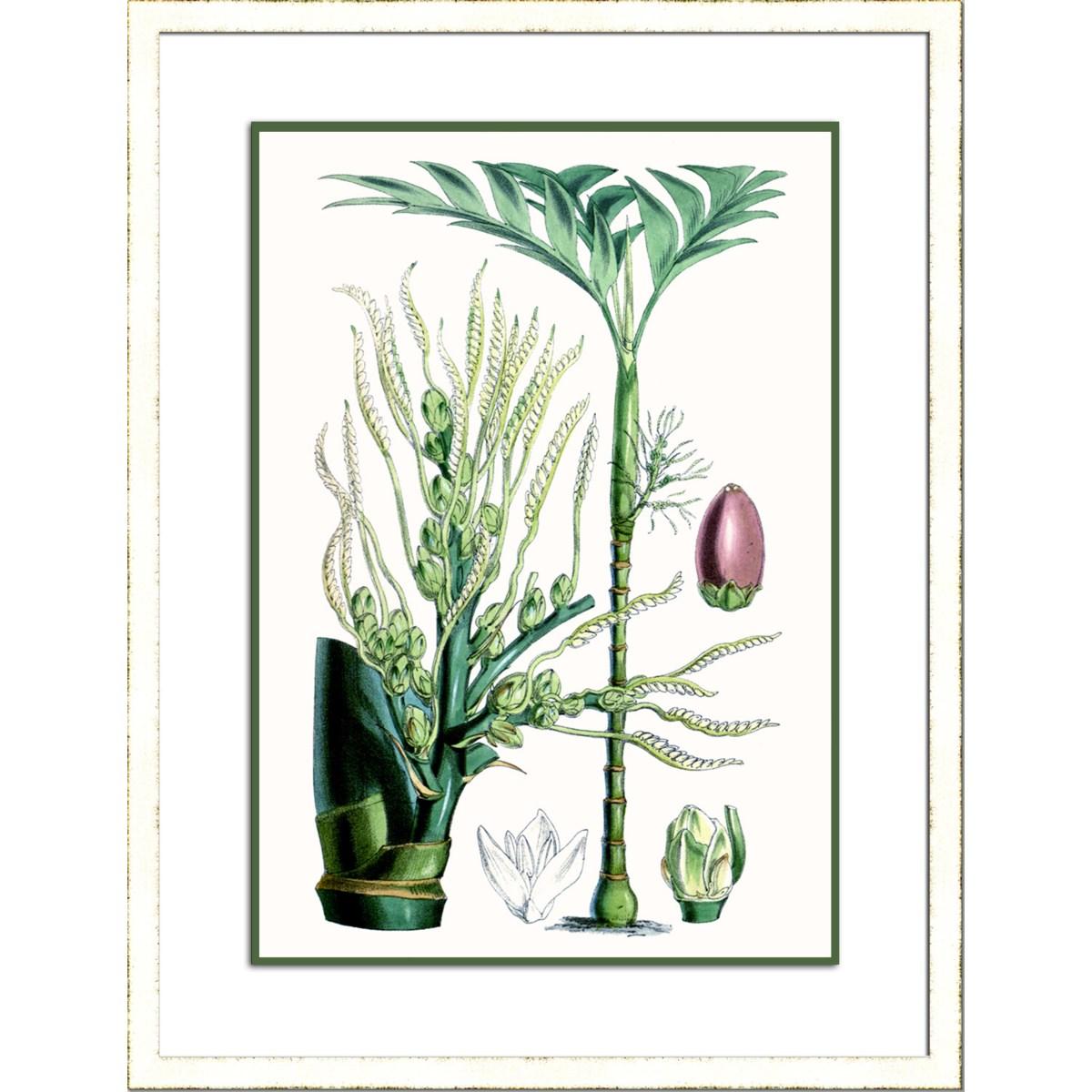 TROPICAL PLANTS III