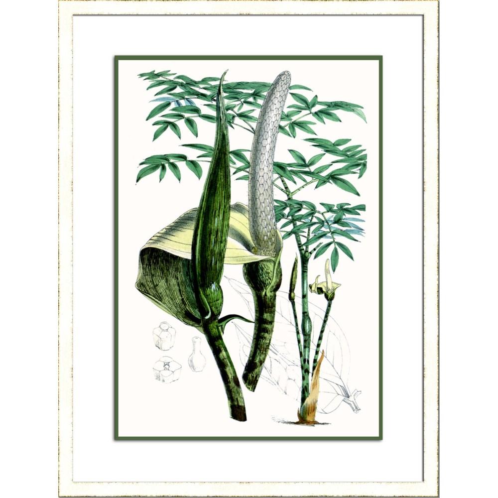 TROPICAL PLANTS IV