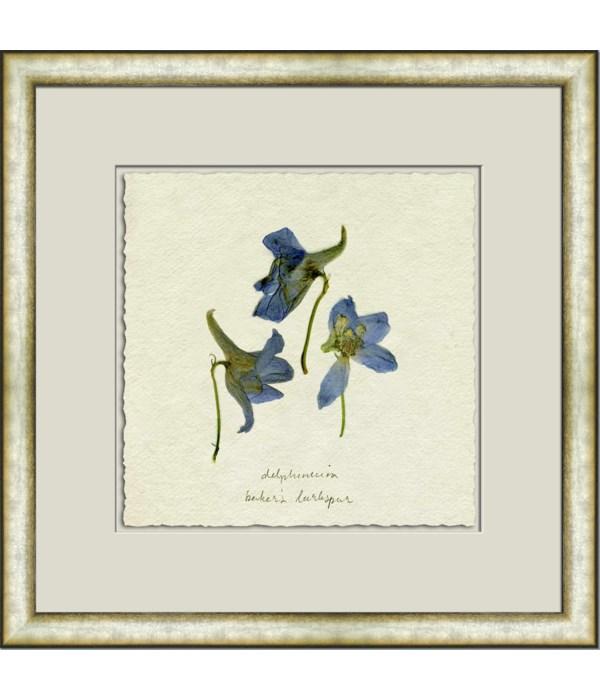 PRESSED BLUE DELPHINIUM II
