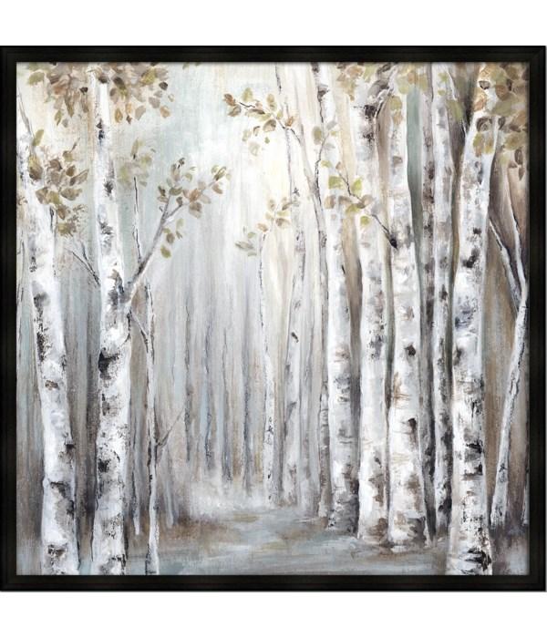 SUNSET BIRCH FOREST III (framed)