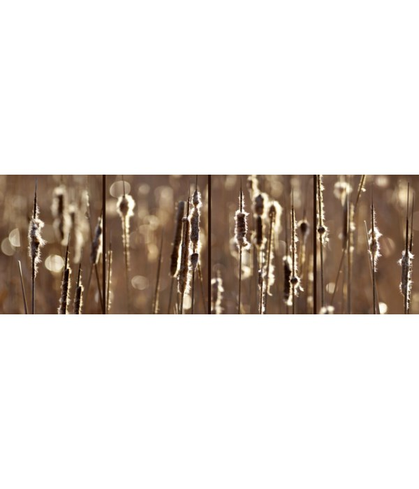 CATTAILS IN THE LIGHT (flash sale)