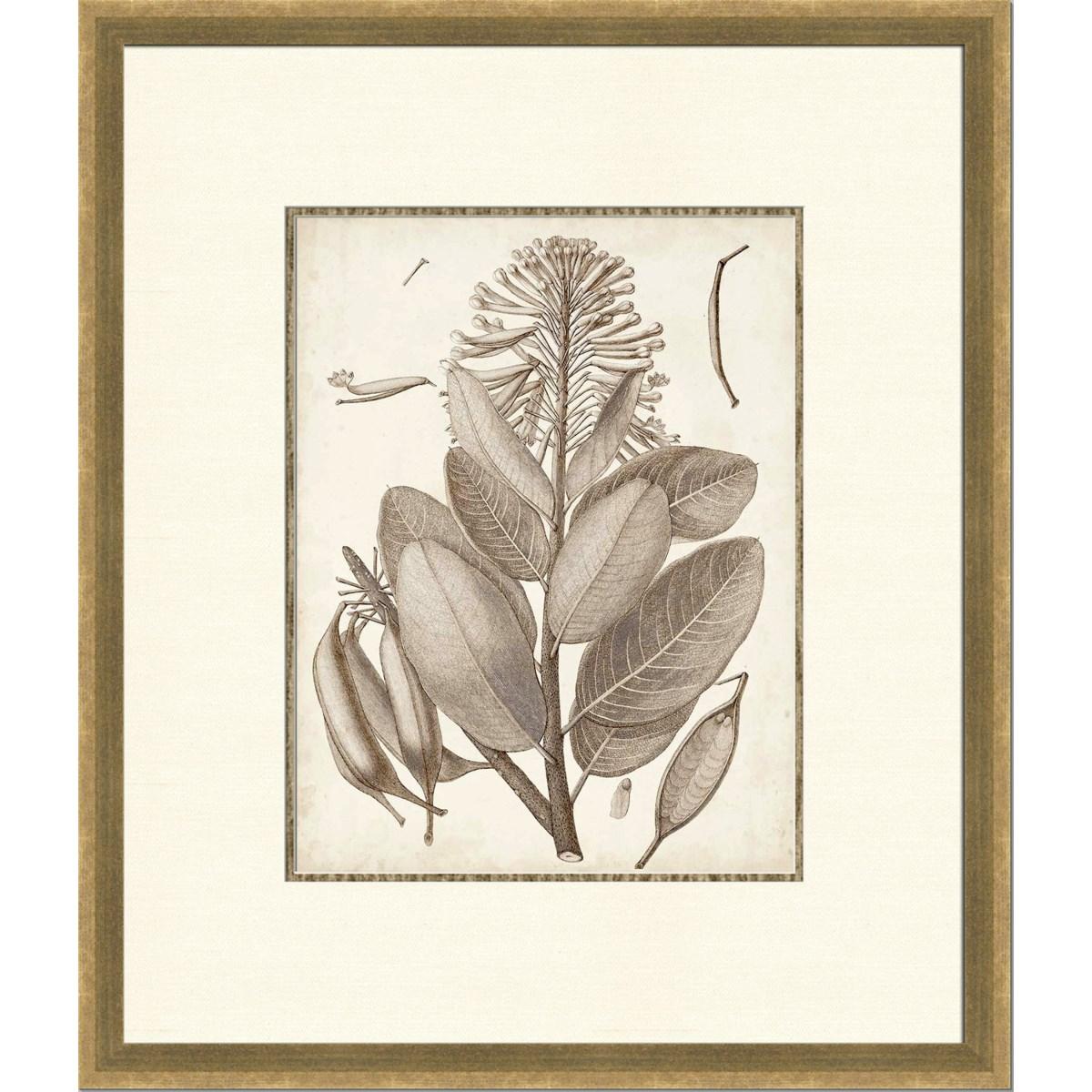 SEPIA EXOTIC PLANTS I