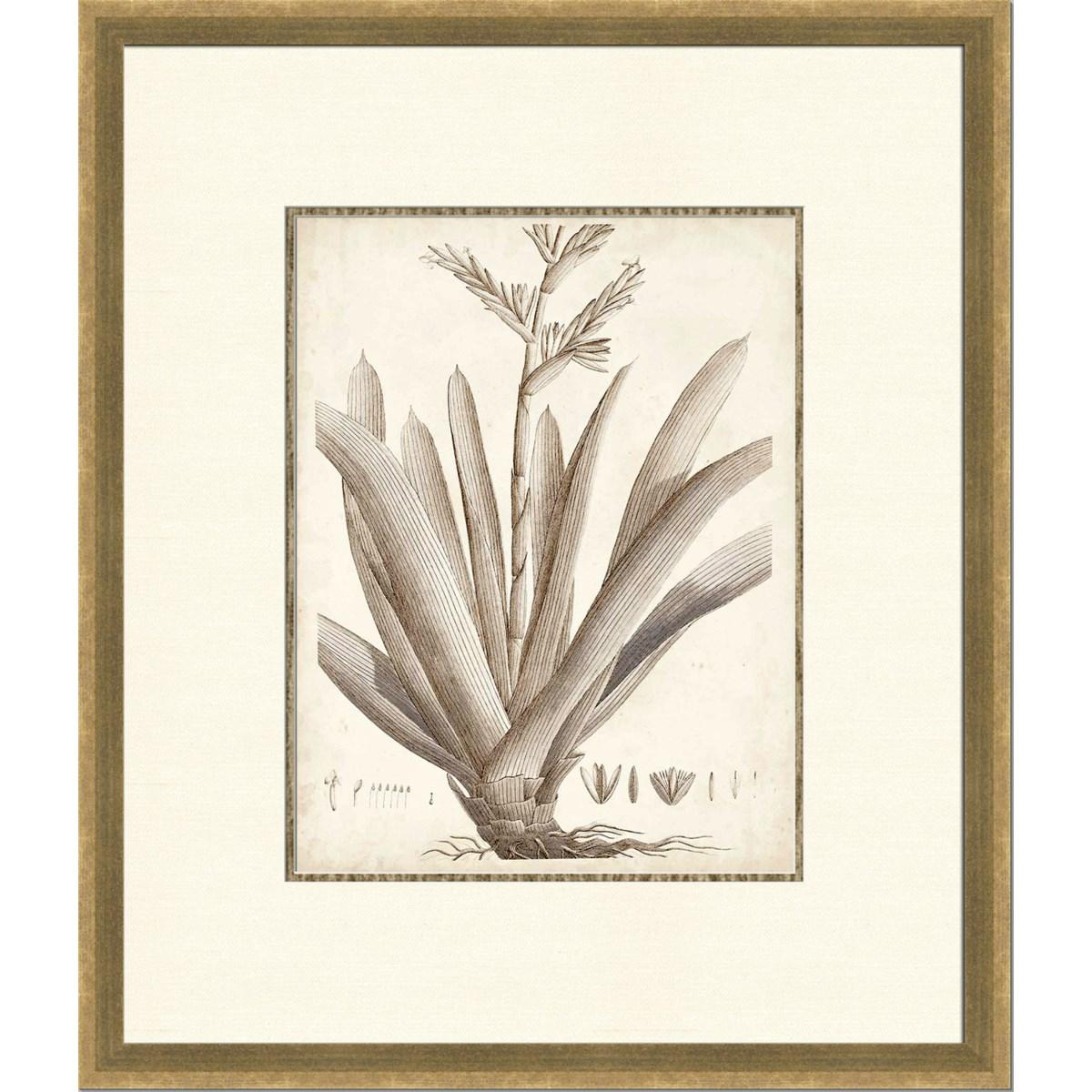 SEPIA EXOTIC PLANTS VIII