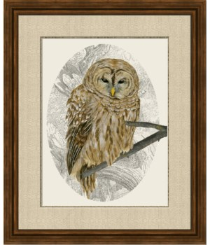 BARRED OWL I