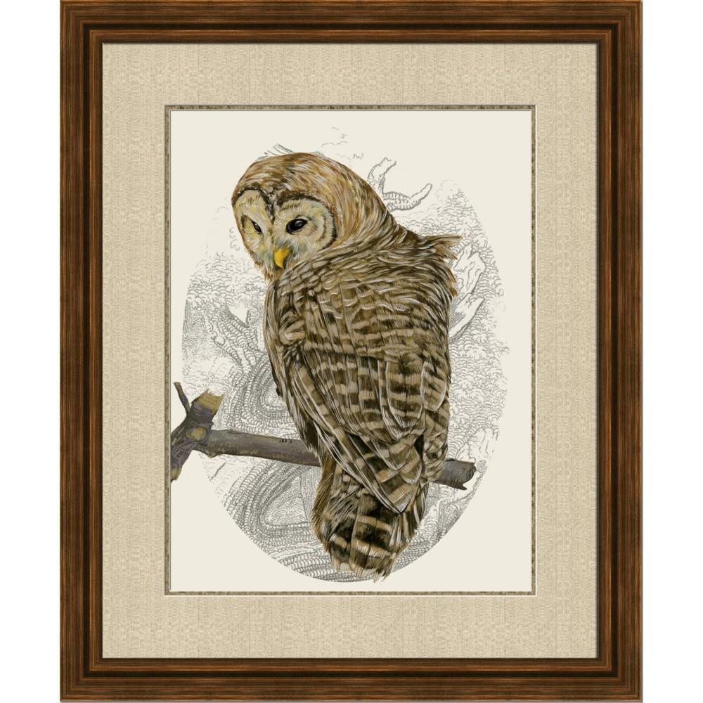BARRED OWL II