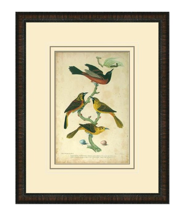 ORCHARD ORIOLE (giclee)