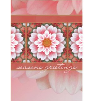 HOLIDAY DAHLIA XMASBOX