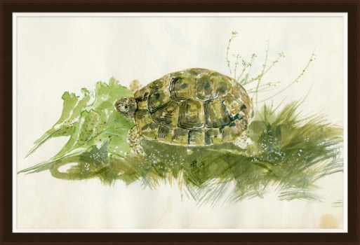 Parivola Italy, Turtle Sketch