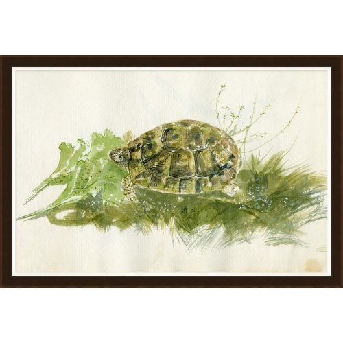 Parivola Italy, Turtle Sketch