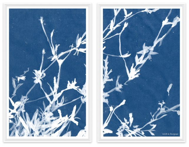 Cyanotype Blues