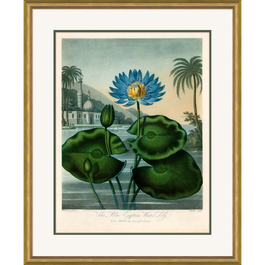 Thornton's Botanicals