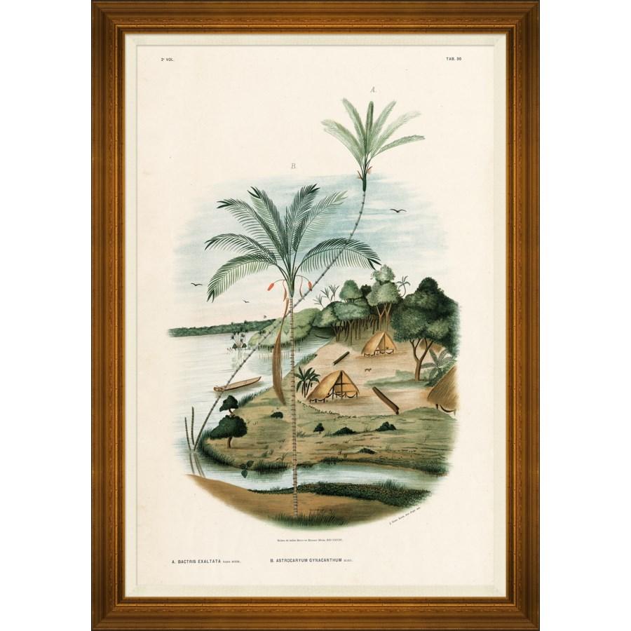 African Palms