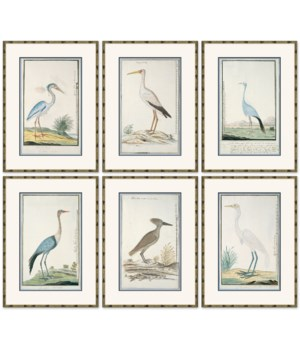 Bird Drawings, circa 1777