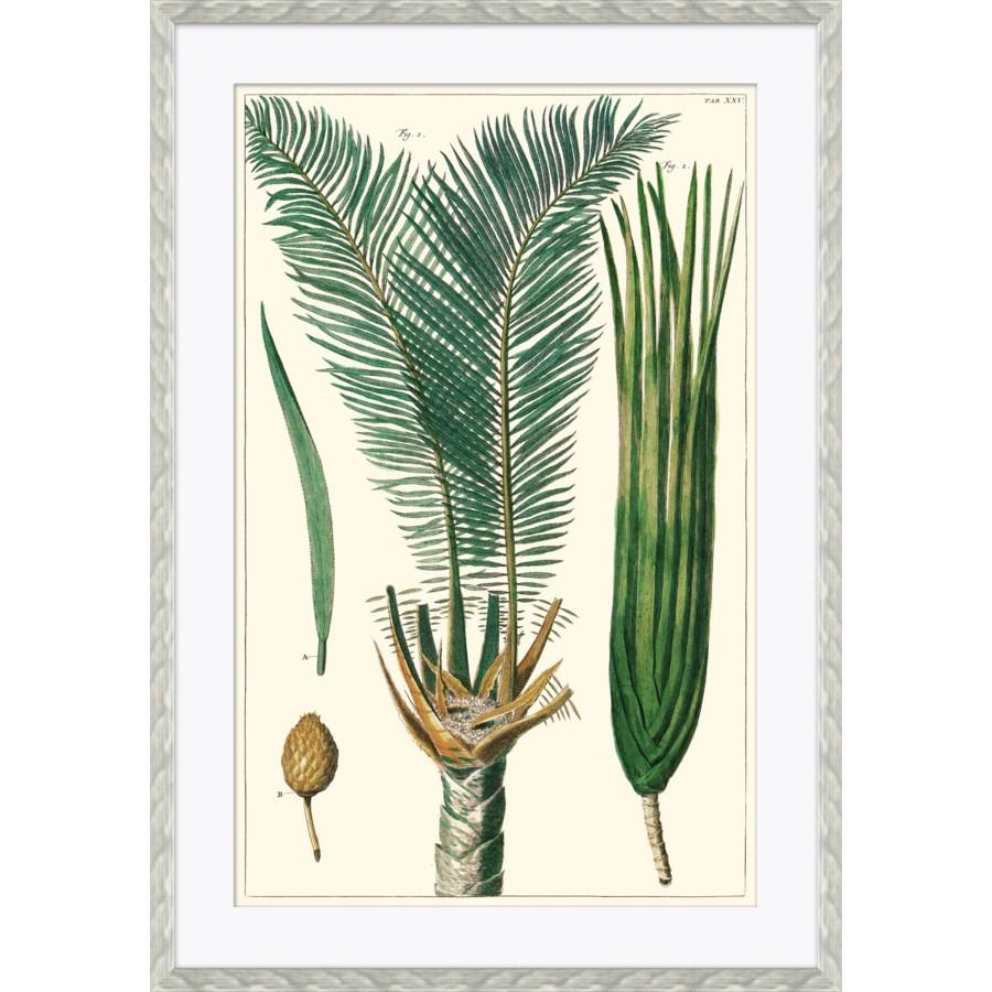 Exotic Palms