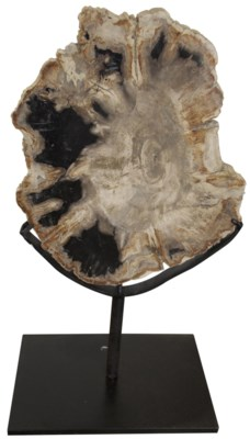 """Wood Fossil with Stand, 10"""""""