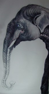Elephant Trunk