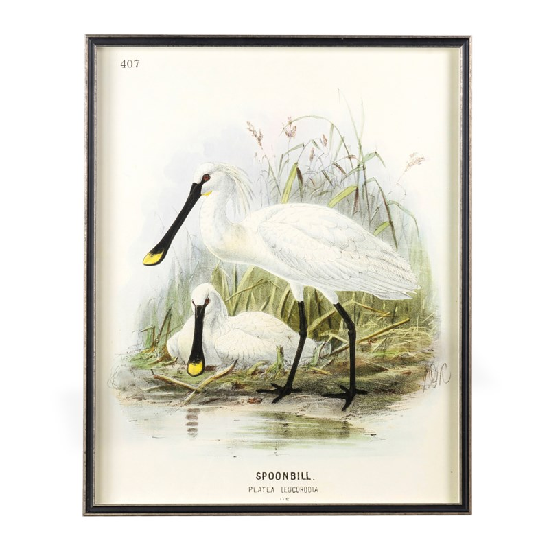 "* Waterbirds Spoonbill(407) & Little Egret(399) Set/2, 24""x30"""