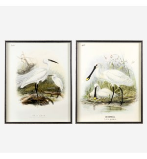 "* Waterbirds Spoonbill(407) & Little Egret(399) Set/2, 24""x30"""