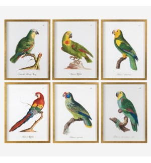 "* Parrots Wall print shadowbox Set/6, 18""x24"""