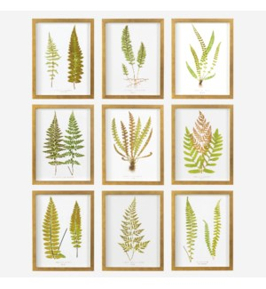 * Ferns Wall print shadowbox Set/9, 12x16