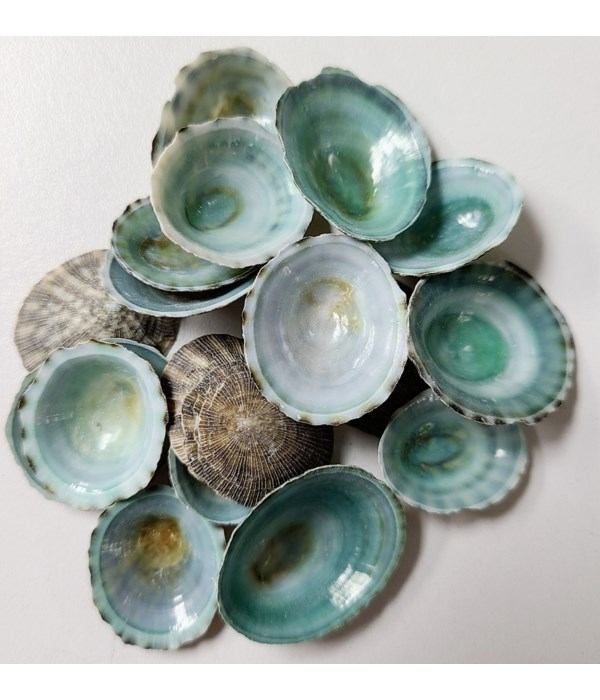 """GREEN LIMPET 1"""""""