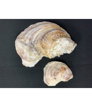 OYSTERS APALACHICOLA SMALL