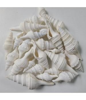 """2-3"""" WHITE TURRIS (KILO)"""