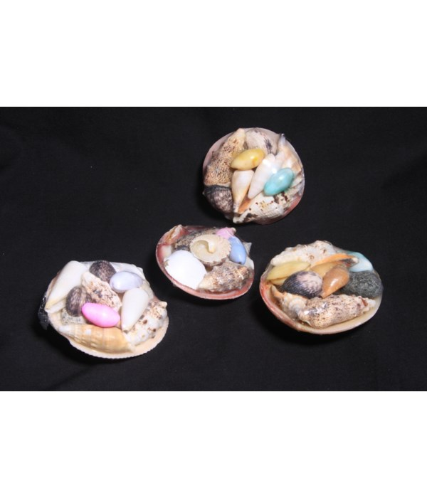 TIGER CLAM SHELL PACK