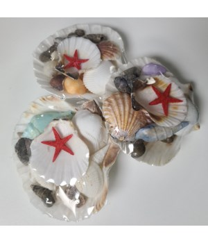 ENGLISH SCALLOP SHELL PACK