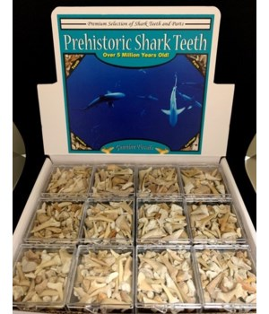 48PC ASST FOSSIL TEETH