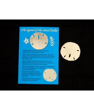 SAND DOLLAR LEGEND POSTCARD W/ SAND DOLLAR