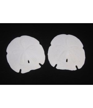"5 - 5 1/2"" ARROWHEAD SAND DOLLARS"