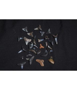SHARK TEETH WHITE